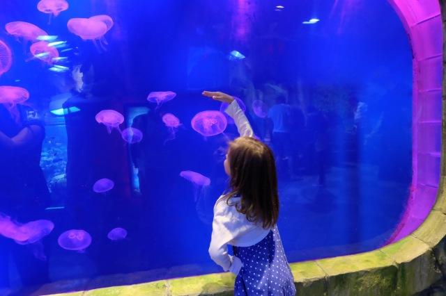 Im Unterwasser-Zoo
